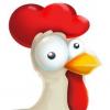 Chicken Derby